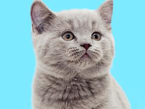 Quand adopter un chaton ?
