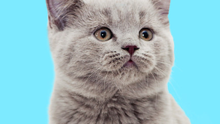 Top 10 Items You Need for Your New Cat