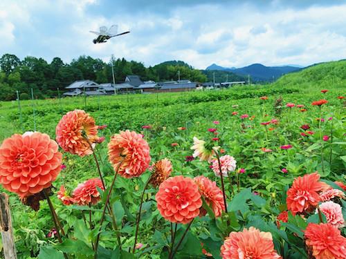 求里畝の畑