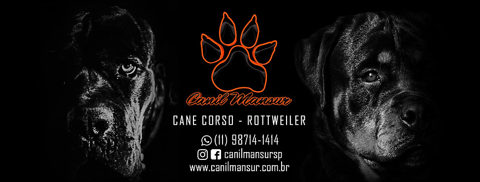 Cane Corso e Rottweiler , Canil Mansur.j