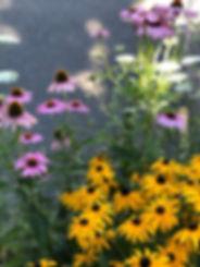 FlowerConeSusan.jpg