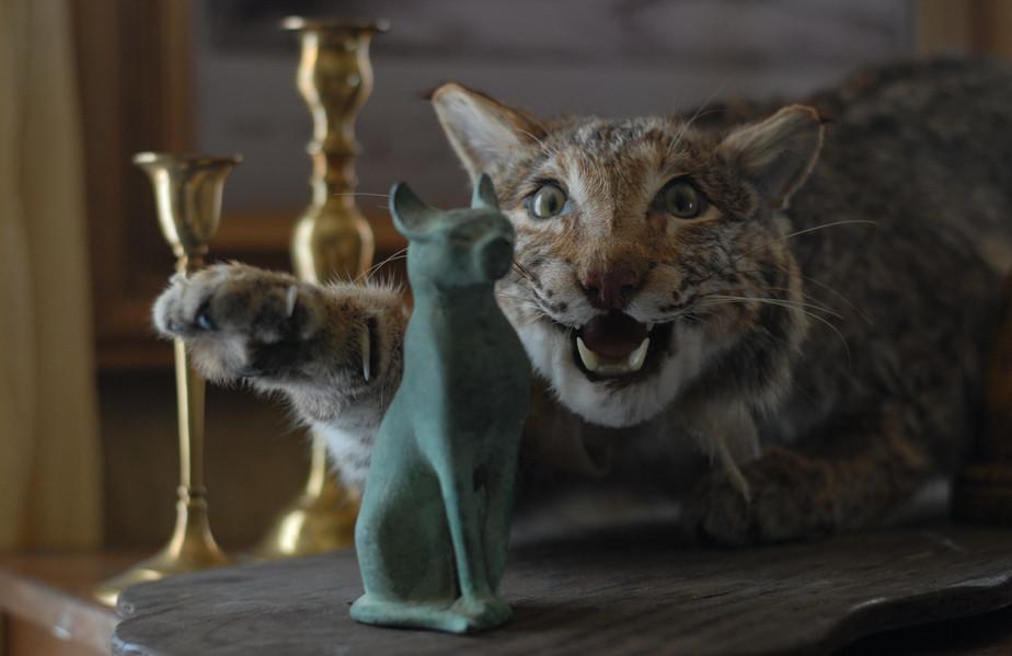 Lynx Kittredge.jpg