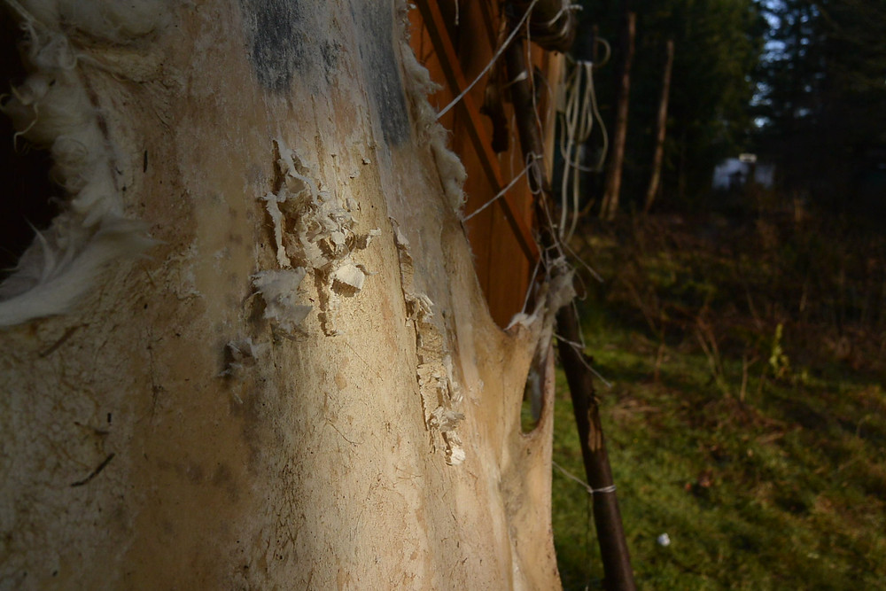 Dry scraping a hide