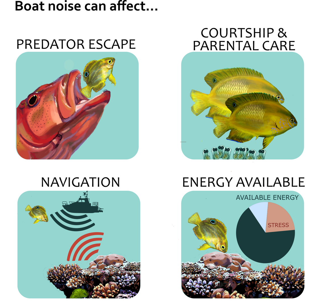 effects of boat noise 4.png