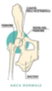 anca-normale-1.jpg
