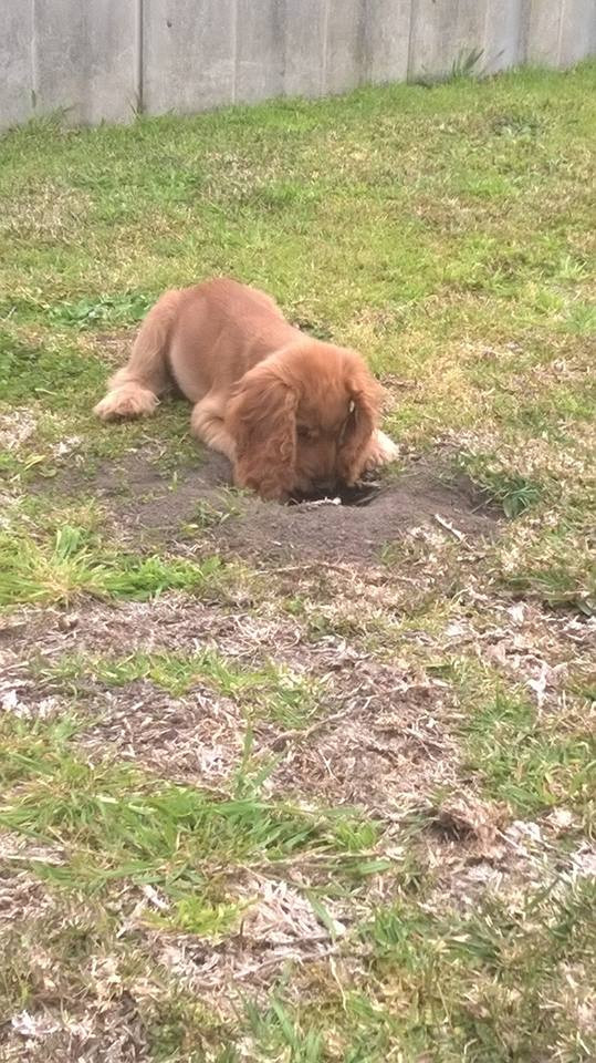 A dog behaviour issue