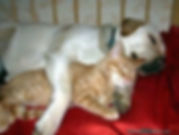 In home training to introduce dogs to new baby, cat and dog or other animals.  Private dog training, dog behaviour