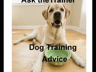 PERSONAL Dog Training Advice?!?!