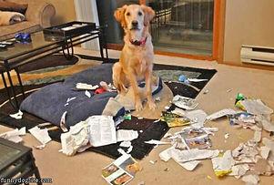 In home dog training for fearful dog, dog aggression, anxiety, reactive dog, destructive dog, separation, barking dog