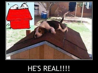 Who does YOUR dog look up to?