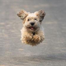 Best dog training, best dog obedience, best dog behaviour