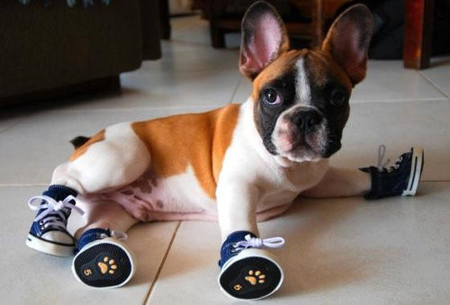 Your dog training skills will help you teach your dog to wear just about anything!