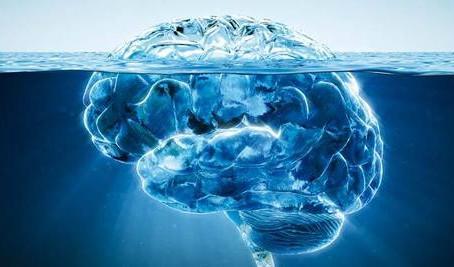 Votre coeur a un cerveau !!