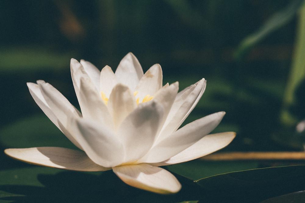 yogaghara chambéry