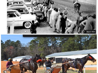 Pinehurst Harness Track showcases exceptional equines
