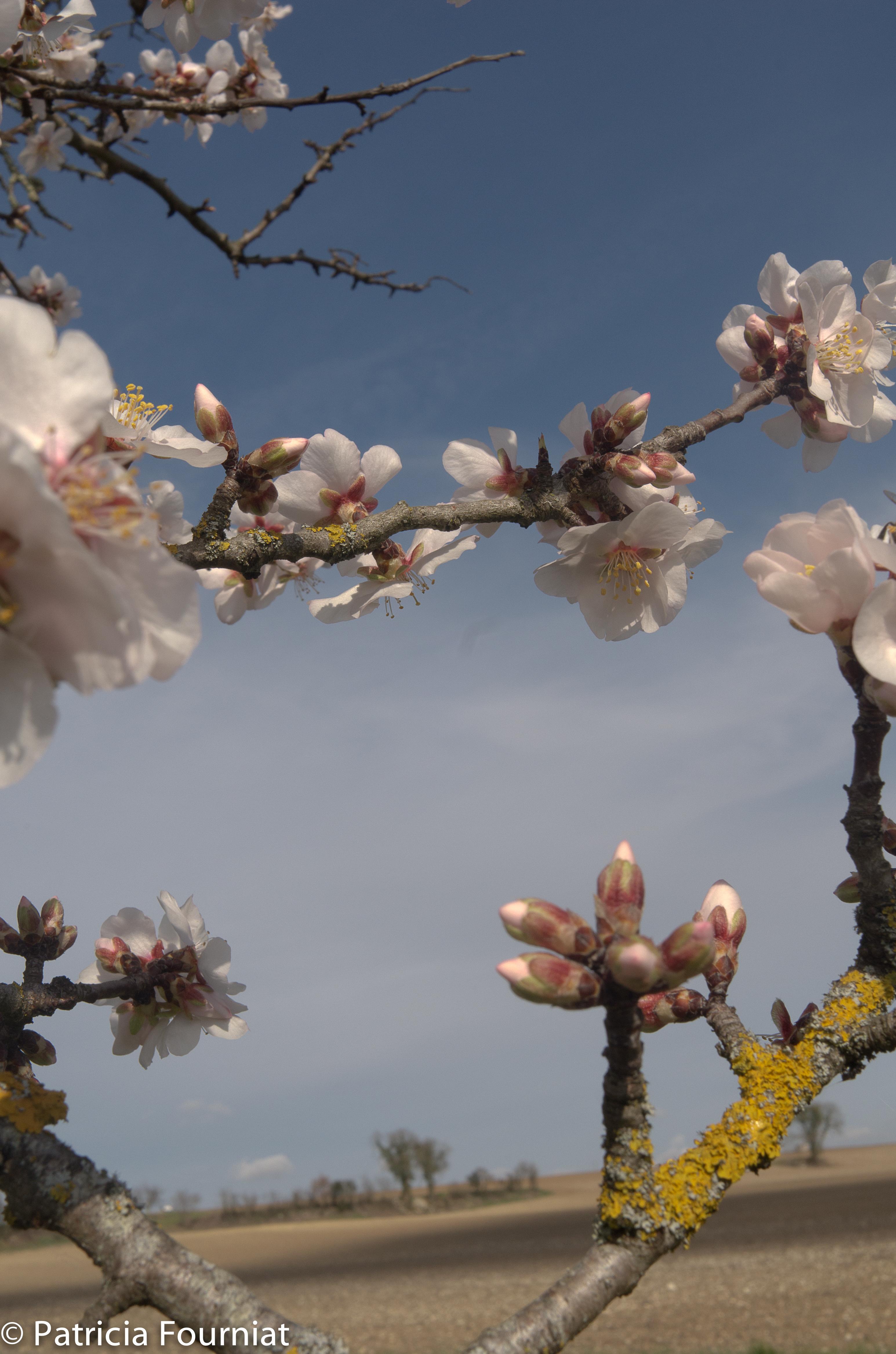 février et les premières floraisons