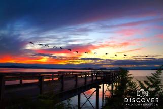 Sidney_pier_geese_Exposure_8870-exposure