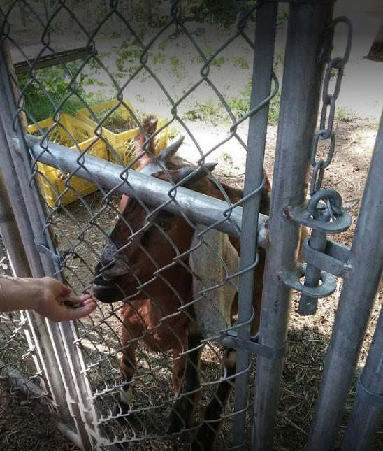 Children's Petting Zoo