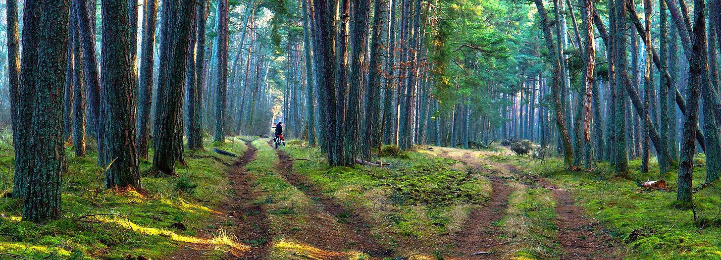 trail_fork_forest_quad_atv_trails_2400px