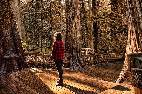 Giant_Cedars_Boardwalk_cedar-trees_Revel