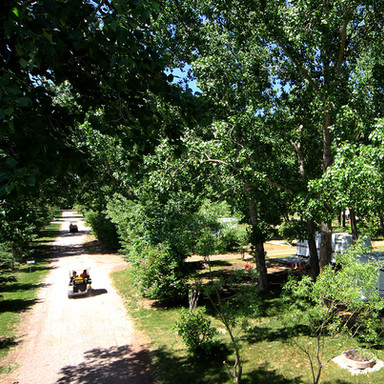 trees_trailer_Oasis_Grove_golf_carts_634