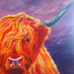 Scottish Highland Steer.jpg