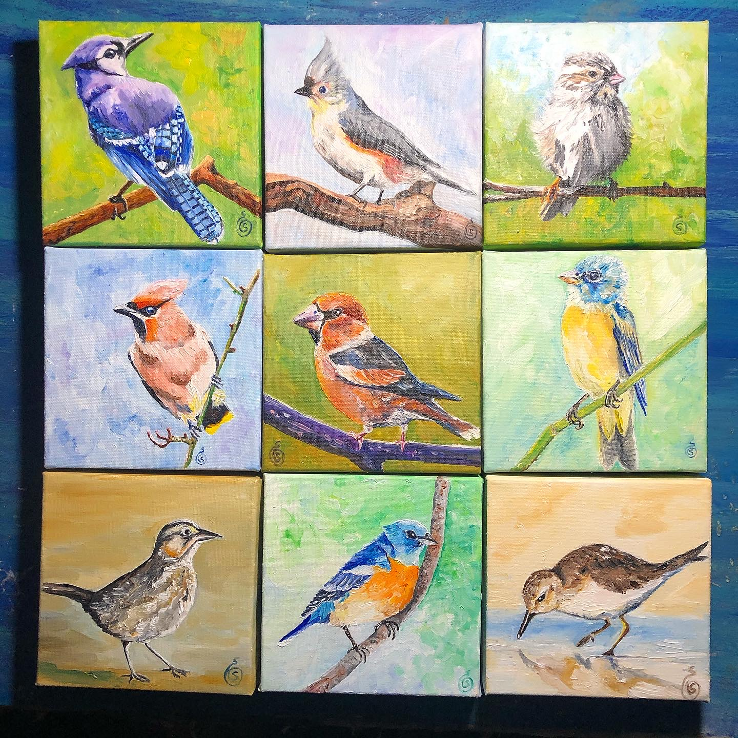 "assorted 6"" square bird paintings"