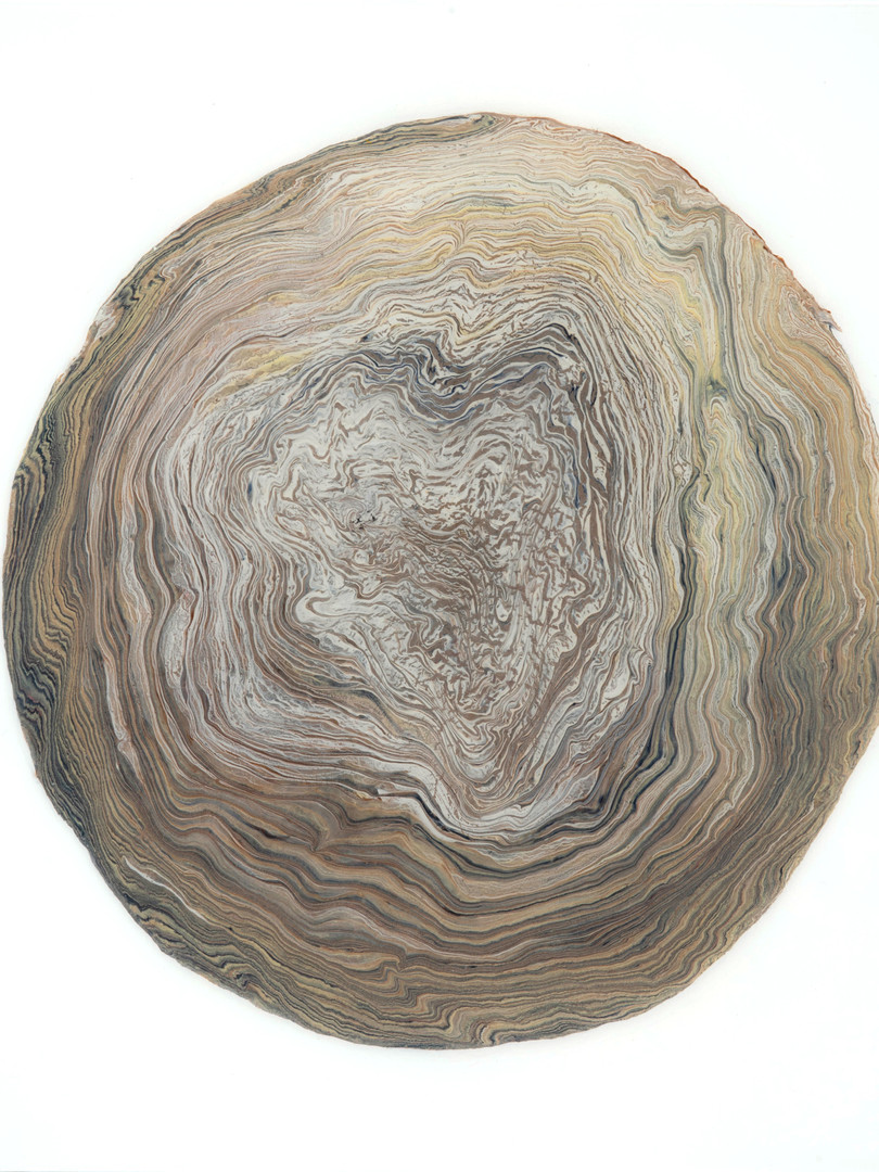 Tree Ring 7