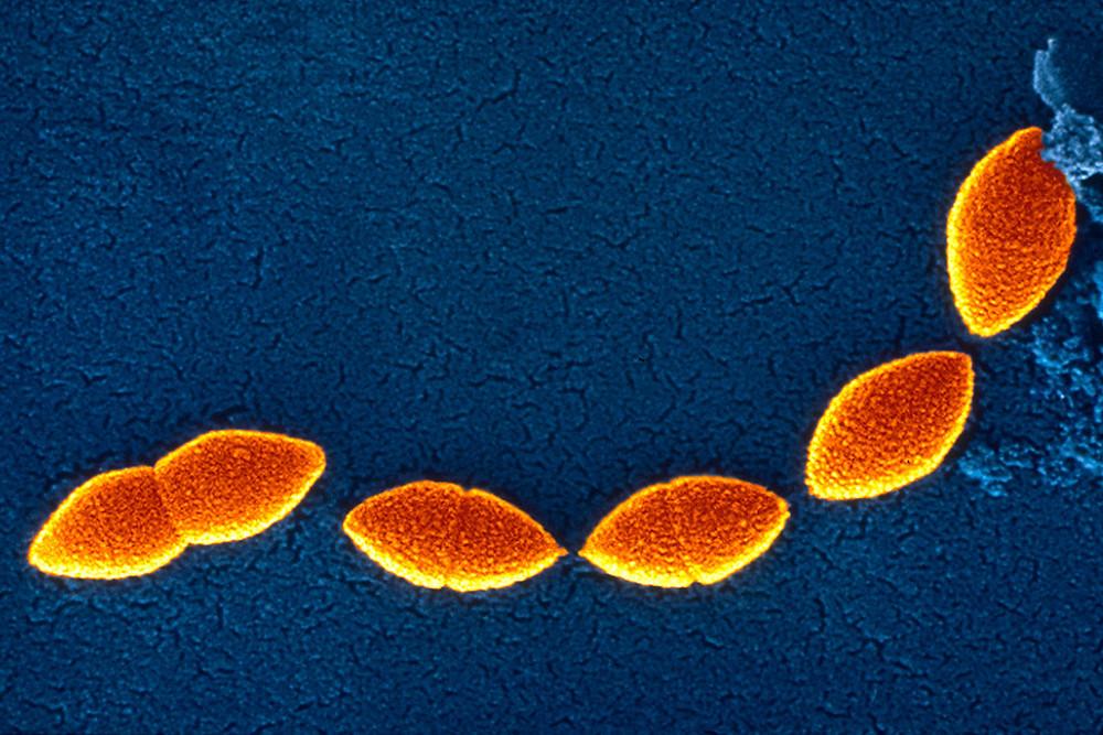 Fotographer: Alain Grillet. Sanofi Pasteur / Flickr