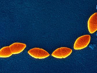 Kistik Fibrozlu Çocuk Ve Erişkinler İçin Pnömokok Aşısı