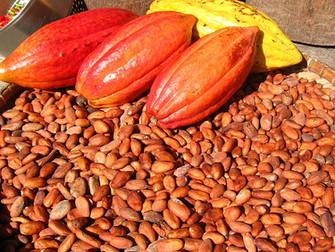 Kakaonun Kan Basıncına Etkisi