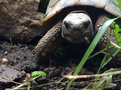 turtles live 023