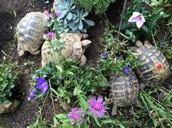 turtles live 020