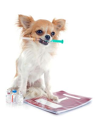 holistisch,dierenarts,holistischdierenarts,acupunctuur,dierenartsaanhuis,dierenkliniek,dierenartsenpraktijkoudetonge,goededierenarts,dierenartspraktijk,dryneedling