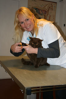 Den Bommel Goeree Overflakkee  holistisch dierenarts acupunctuur dierenartspraktijk diergeneeskunde veterinaire dierenkliniek dierenkliniekgo goededierenarts  integratieve diergeneeskunde dierenarts aan huis