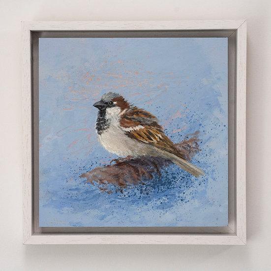 House Sparrow 1