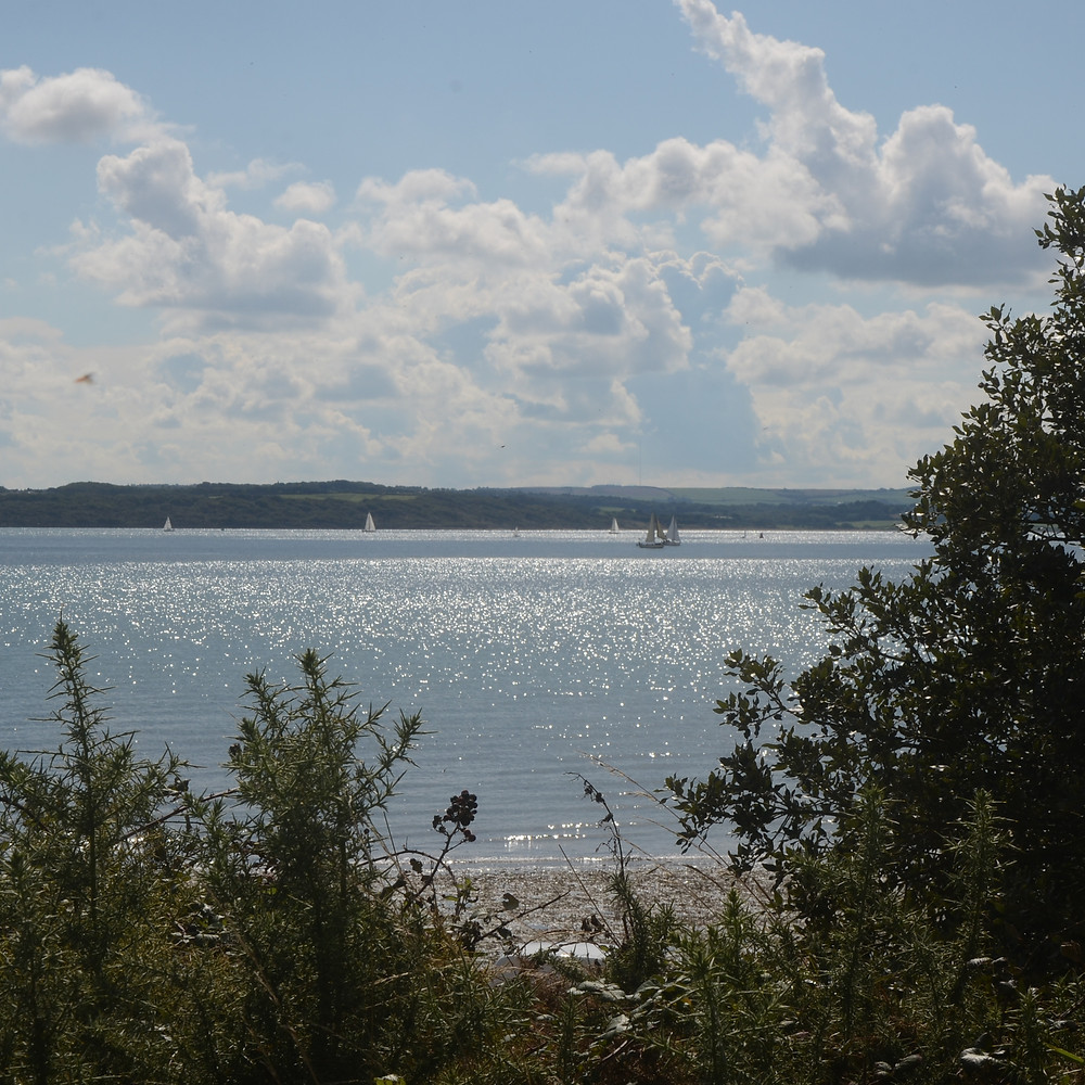 sail boats on the Solent at Lepe