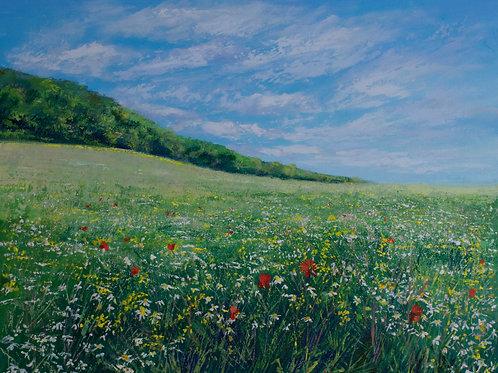 Wildflowers, Chantry Woods