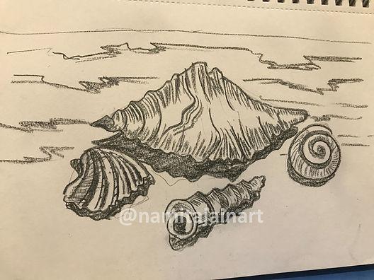 Charcoal Shells.jpg