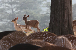 Fawns Above a Sea of Spots