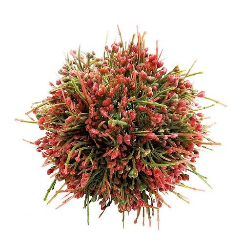 Die Vlakte Plant Decor Ball