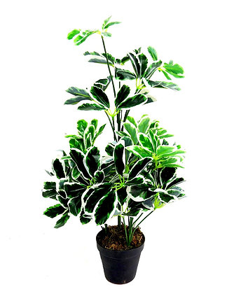 Green and Black Artificial  Umbrella plant