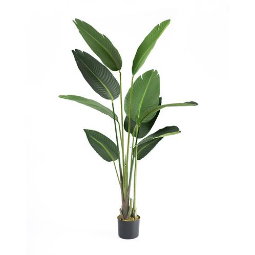 Banana Leaf Plant 1.5m