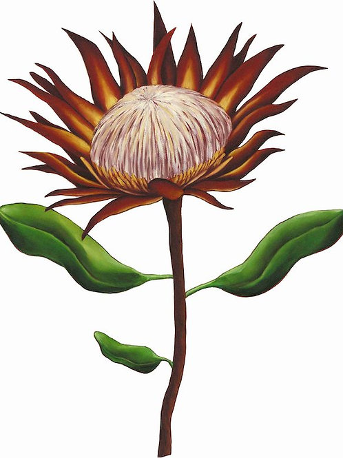 Protea Wall Art Prints Woodka Interiors