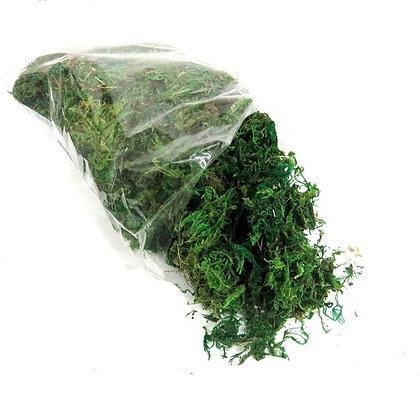 Tree Moss Fresh Green