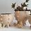 Ceramic spiked planter pot