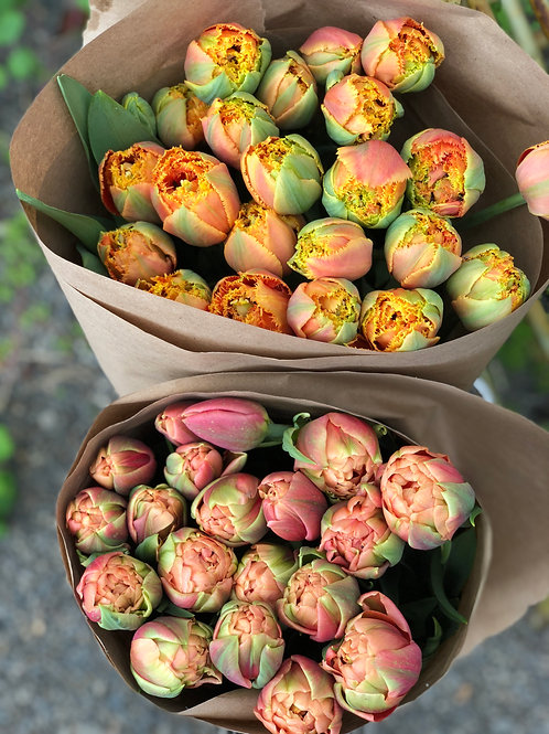 Fresh Tulips 16 Stems