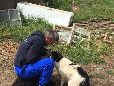 Bericht Helfer-Einsatz in Rumänien (Mai)