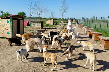 Dog Park für gerettete Strassenhunde in Lugoj