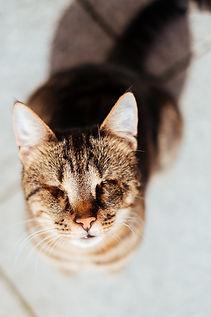 Katze fotografiert von sethbatesphotography.com